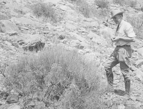 1930s Expeditions