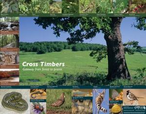 Cross Timbers Poster