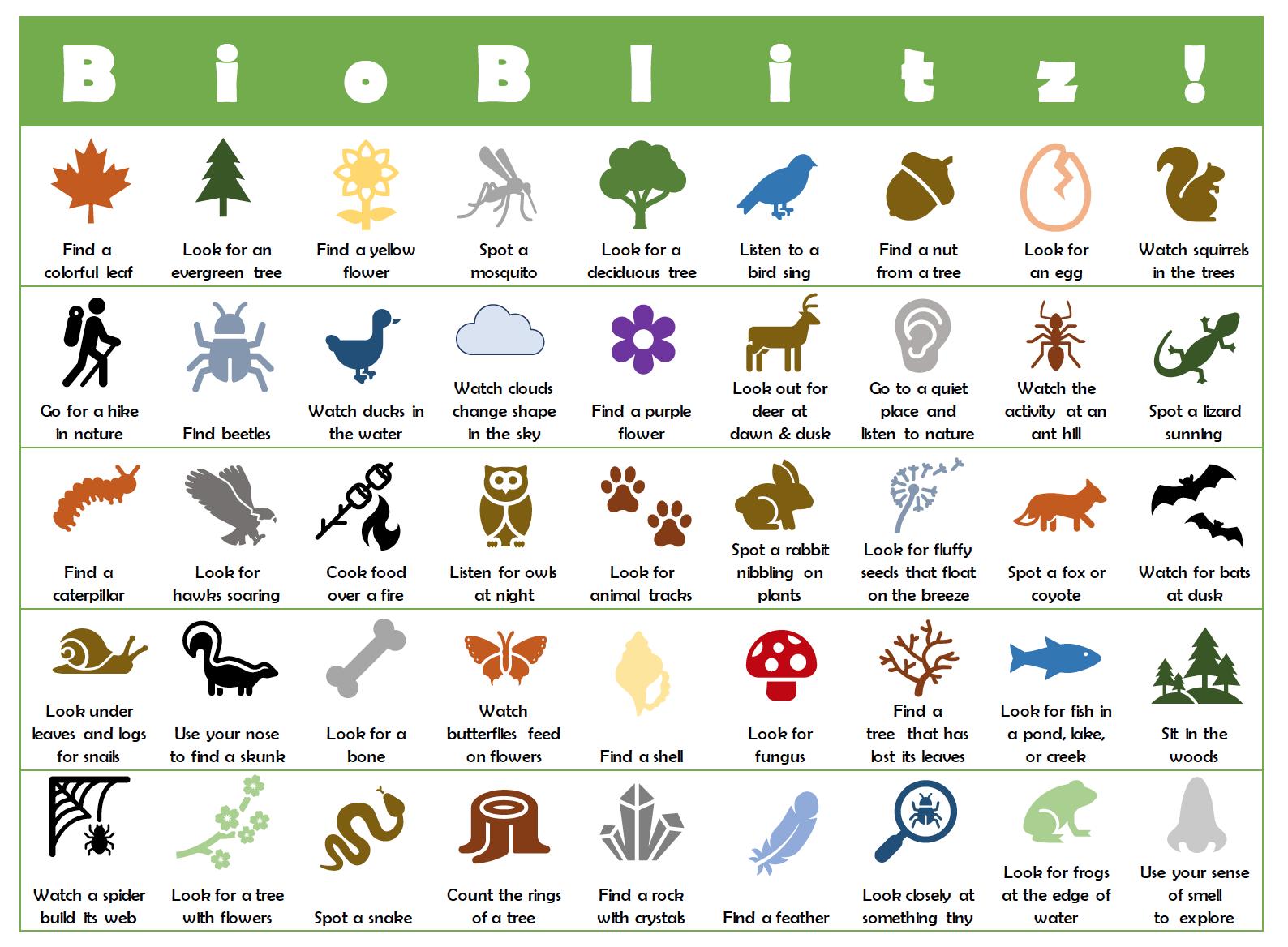 BioBlitz! BINGO Sheet