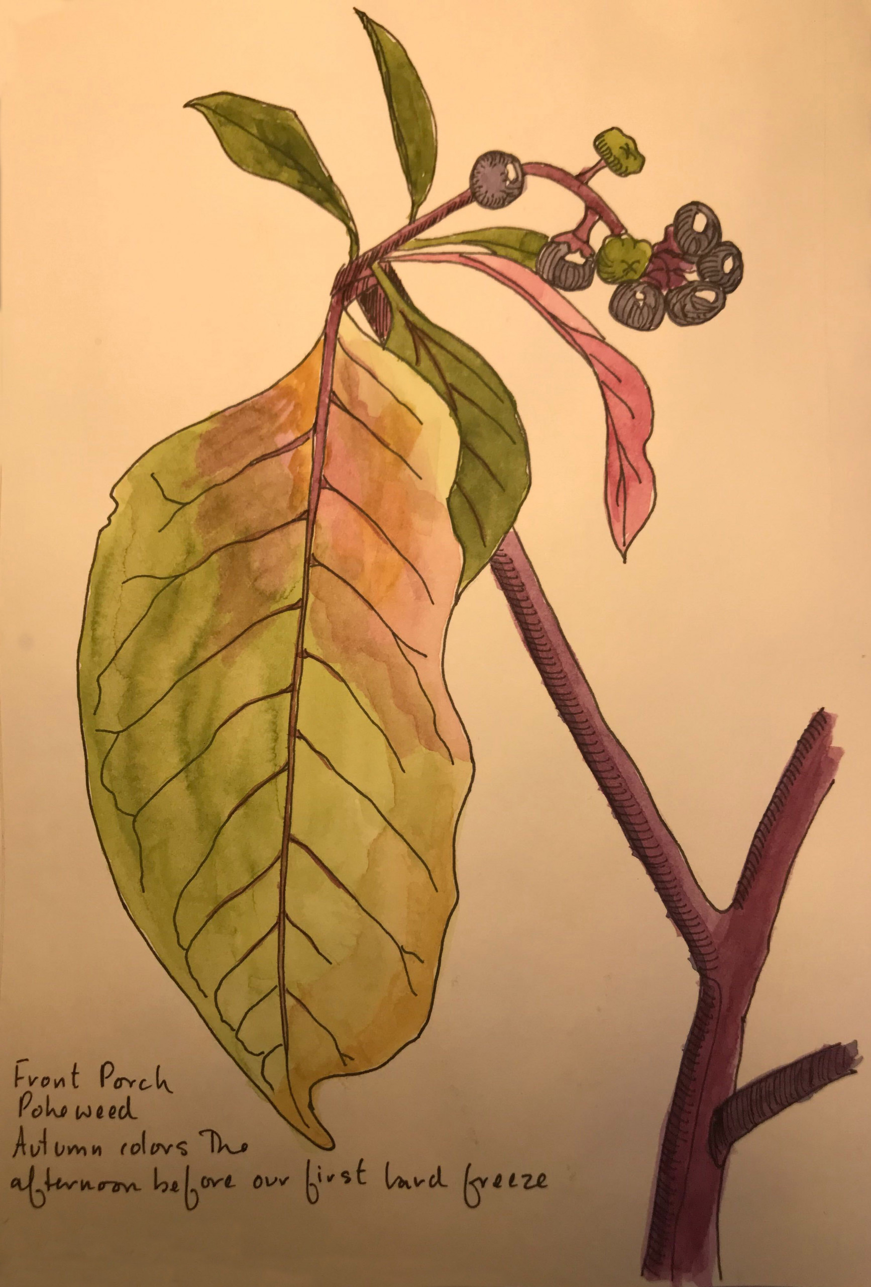 Pokeweed by Priscilla Crawford